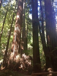 California Trip Part 3 San Francisco Cardpe Diem